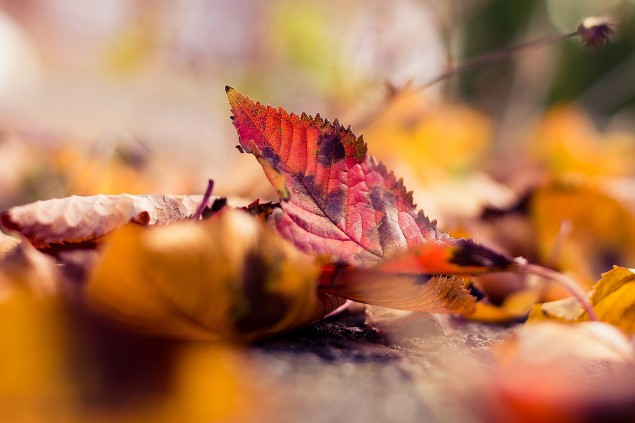 Six top tips: Putting leaves to good use
