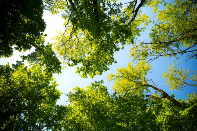 Six top tips: choosing and maintaining larger trees for your property