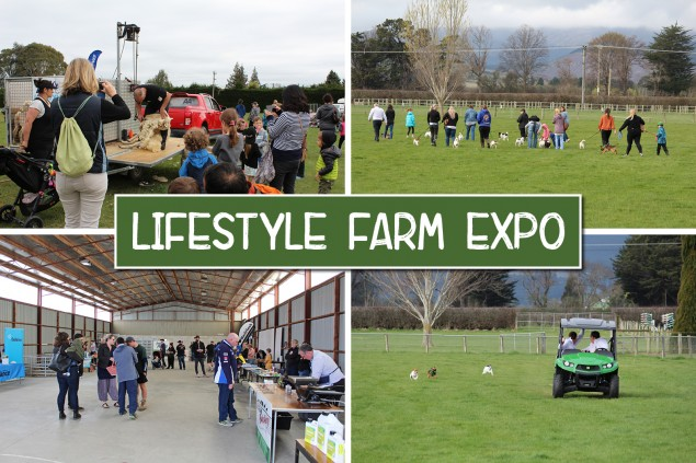 Lifestyle Farm Expo: A fun day out for all